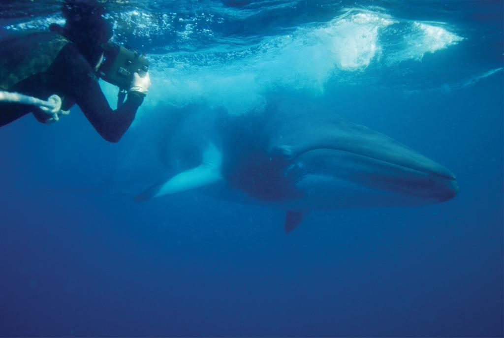 Bryant svømmer og filmer en hval