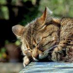 Hjemløse katter fortjener bedre