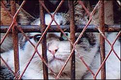 Slakting av katter i kina