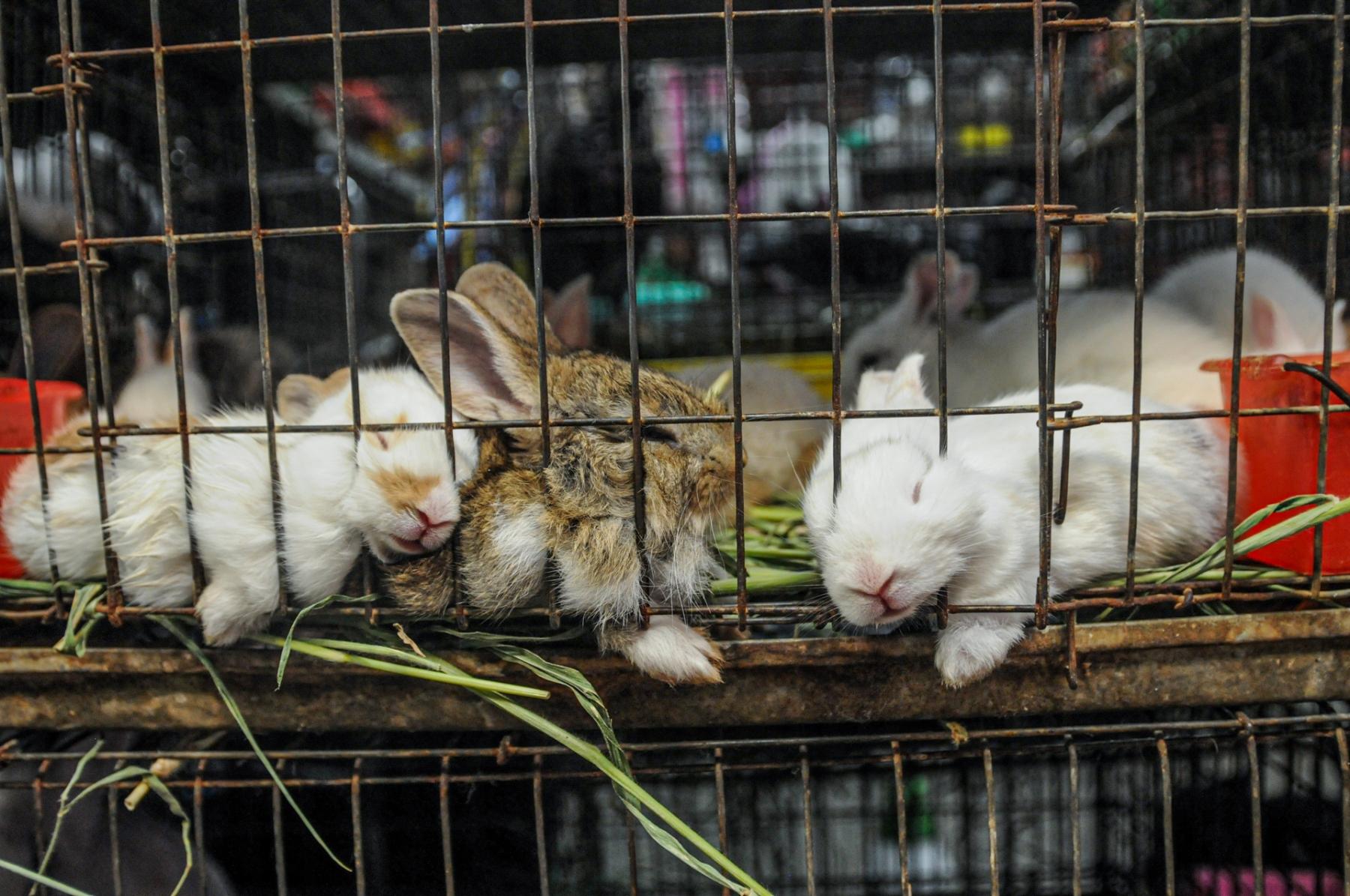 Kaninungerfanget i et lite bur. Presser ansiktene sine gjennom gitteret