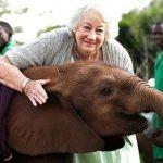 - Forby elefanter i sirkus straks