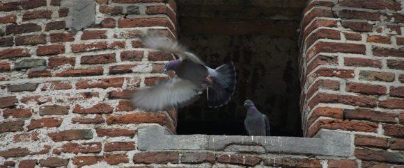 To duer på et tak.