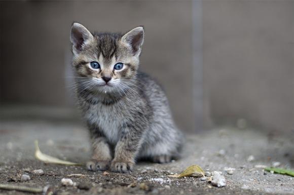 En liten kattunge som står på bakken og titter inn i kamera