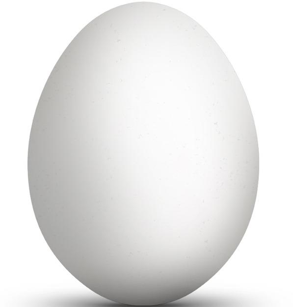 Et egg på hvit bakgrunn.