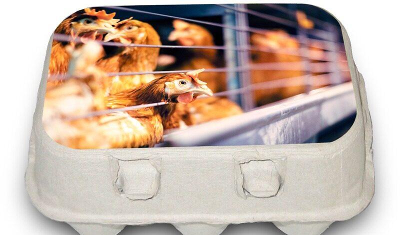 Illustrasjon av eggekartong som viser høner i bur.