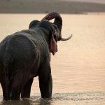 Endelig elefant-forbud!