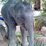 Beslaglegging av dyr i Thailand - hjelp til!