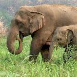Rødt foreslår forbud mot sirkuselefanter i Oslo