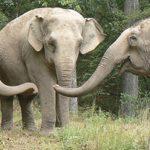 Bortenfor zoo og sirkus