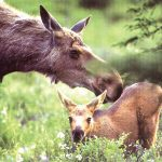 Fakta om skogens dyr