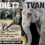 Arnardo i Oslo, markering mot dyr i sirkus