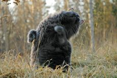 Dansende katt. Foto: Øivind Pedersen