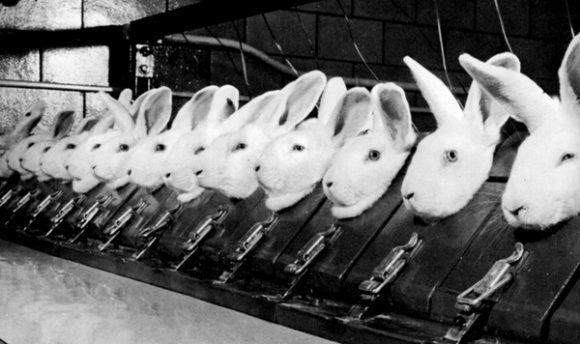 Kaniner, dyreforsøk for produkttesting