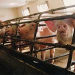Husdyrhold, økonomi og EU