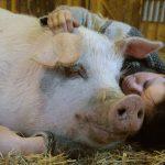 Kunsten å være gris