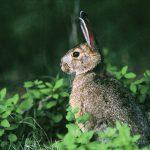 Dyrevernere til kamp mot småviltjakt