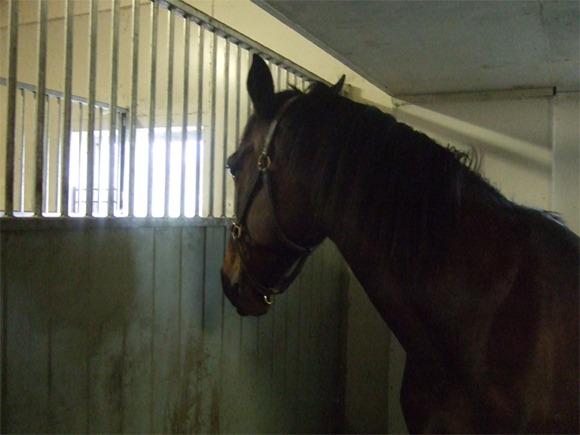 En hest som står i bås og titter gjennom gitteret