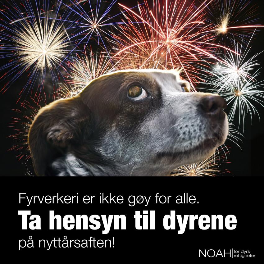 Illustrert plakat som viser redd hund med fyrverkeri på himmelen i bakgrunn. Tekst: fyrverkeri er ikke gøy for alle. Ta hensyn til dyrene på nyttårsaften.