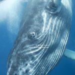 Hvaler: Unik fotoutstilling og ny hvalkampanje