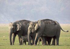 NOAHa arbeid fører til at stadig flere kommuner tar avstand fra bruk av eksotiske dyr i sirkus.