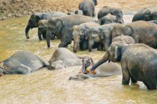 Elefanter og andre dyr hører ikke hjemme på sirkus.