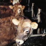 Dyrevernet grep ikke inn mot bonde