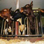 Krev at dyrs lidelse tas på alvor