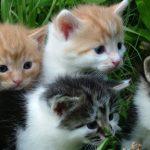Omsorg i praksis - kattekrav