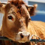 Ønsker politiet å stagnere norsk dyrevelferd?