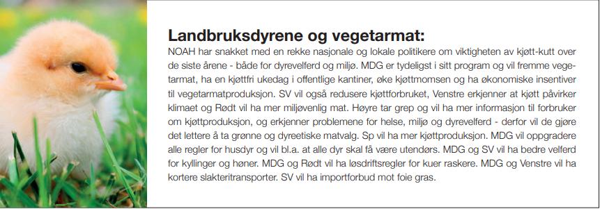 Bilde av en kylling med følgende tekst: NOAH har snakket med en rekke nasjonale og lokale politikere om viktigheten av kjøtt-kutt over de siste årene - både for dyrevelferd og miljø. MDG er tydeligst i sitt program og vil fremme vegetarmat, ha en kjøttfri ukedag i offentlige kantiner, øke kjøttmomsen og ha økonomiske insentiver til vegetarmatproduksjon. SV vil også redusere kjøttforbruket, Venstre erkjenner at kjøtt påvirker klimaet og Rødt vil ha mer miljøvenlig mat. Høyre tar grep og vil ha mer informasjon til forbruker om kjøttproduksjon, og erkjenner problemene for helse, miljø og dyrevelferd - derfor vil de gjøre det lettere å ta grønne og dyreetiske matvalg. Sp vil ha mer kjøttproduksjon. MDG vil oppgradere alle regler for husdyr og vil bl.a. at alle dyr skal få være utendørs. MDG og SV vil ha bedre velferd for kyllinger og høner. MDG og Rødt vil ha løsdriftsregler for kuer raskere. MDG og Venstre vil ha kortere slakteritransporter. SV vil ha importforbud mot foie gras.