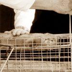 Forbud mot livdyrutstillinger - et skritt i riktig retning