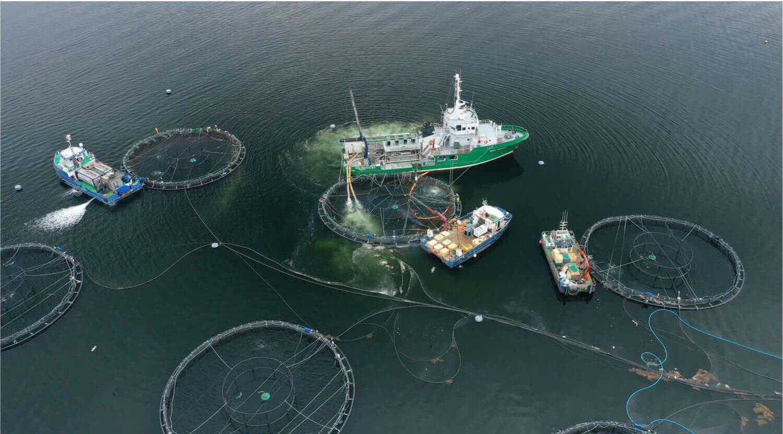 Norsk fiskeoppdrettsanlegg med fire båter og fem store merder
