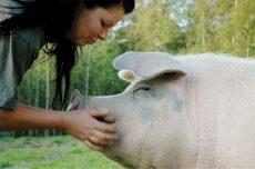 Sissel og grisen Noah. Foto : NOAH