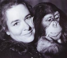 Sjimpansen Ola - dyrehage.