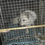 Pelsfarmer mot pelsindustrien