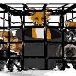 Fra filmen til Taran Steen. NOAH oppfordrer flere til å lage kortfilmer med anti-pels budskap.