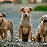 """Nei til importforbud av """"gatehunder"""""""