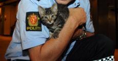 politi-og-katt-klipp-345x180