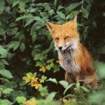 Saboterer jakt – redder liv