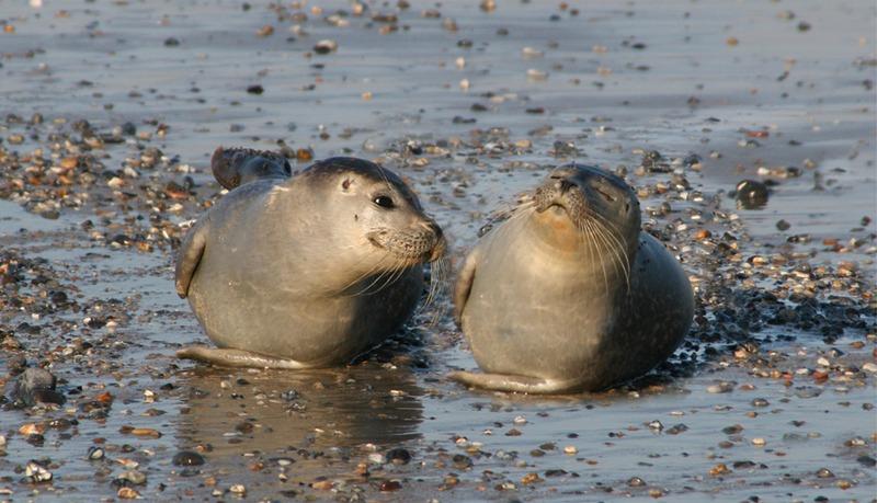 To seler som ligger på stranden.