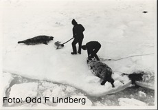selfangst - lindberg
