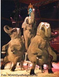 Vestvågøy setter dyrevelferd foran underholdning og sier nei til eksotiske dyr i sirkus.