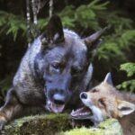 Snusen & Tinni - et unikt vennskap