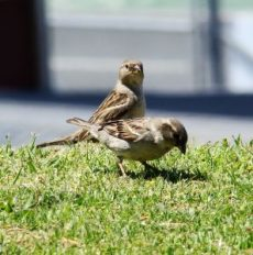 sparrows-1116761-m