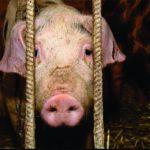 Den nye dyrevelferdsloven er klar fra Stortinget