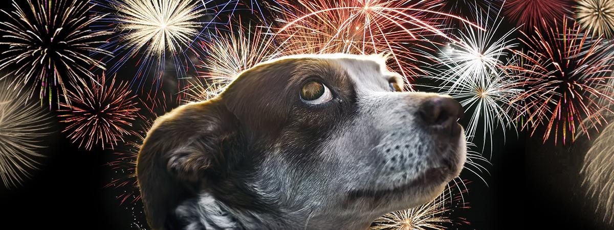 bildet viser en hund som ser engstelig ut og fyrverkeri i bakgrunnen