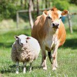 """Regjeringen vil avvikle """"opplysningskontor"""" for kjøtt"""