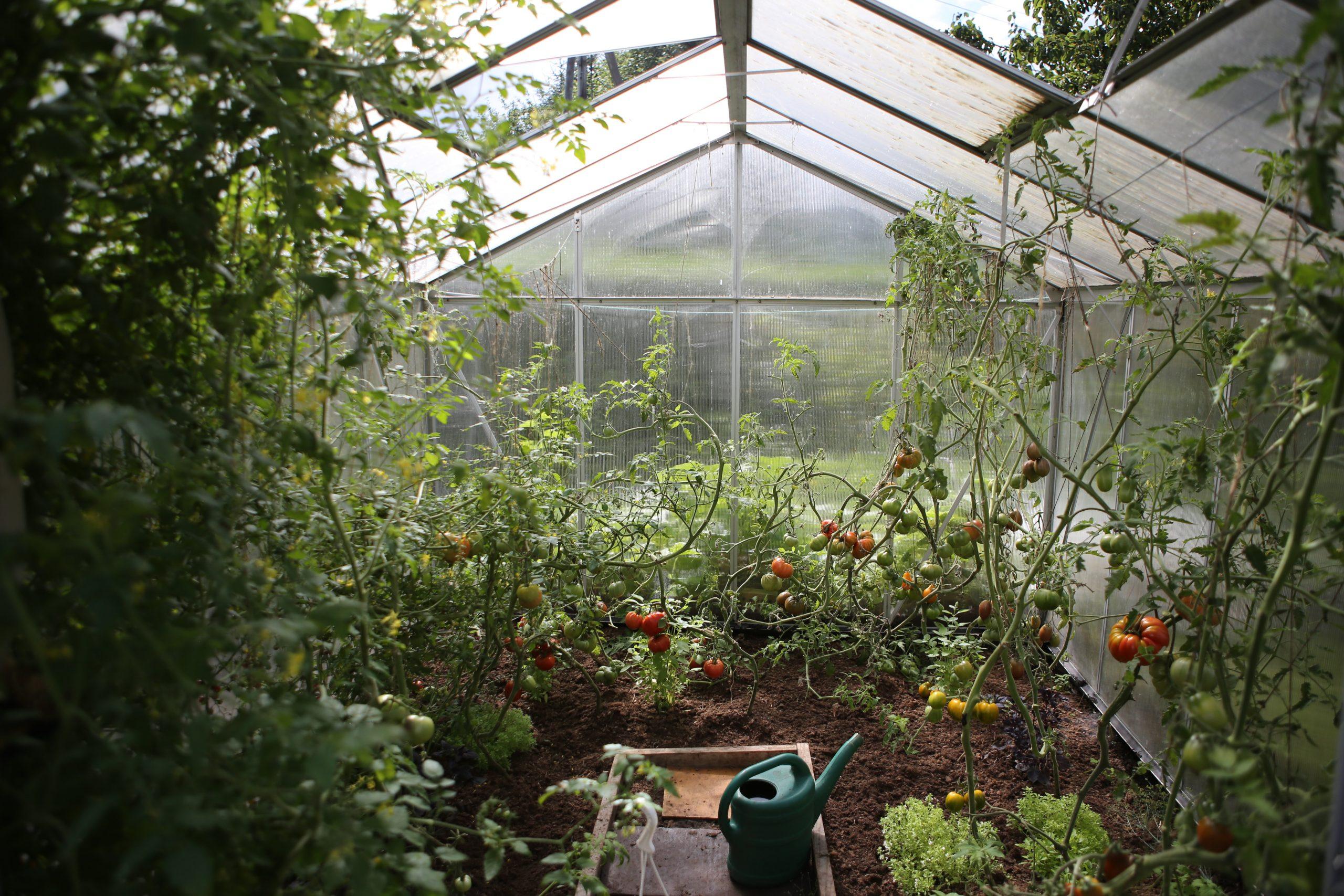 Drivhus med grønnsaker